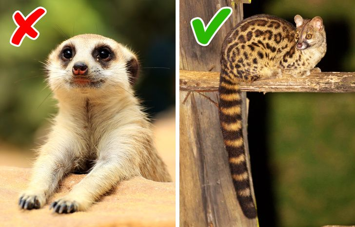 10 exotic animals to keep at home
